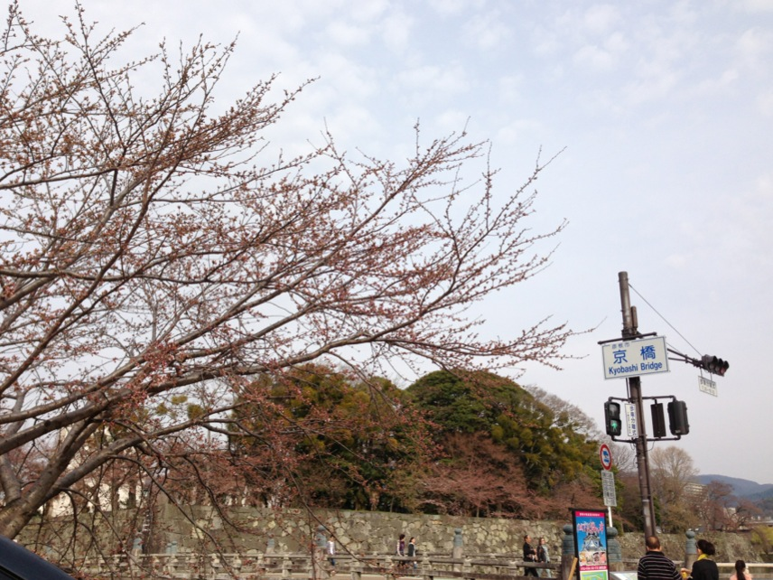 Sakura10